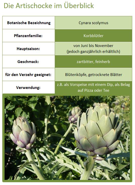 Die Artischocke im Überblick (botanische Bezeichnung, Pflanzenfamilie, Hauptsaison, Geschmack, Verwendung)